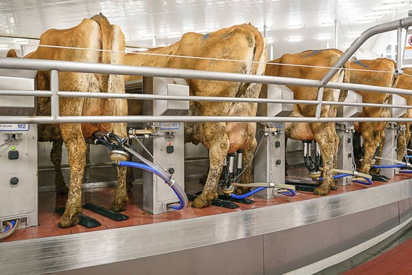 Software Interface with Milking Equipment
