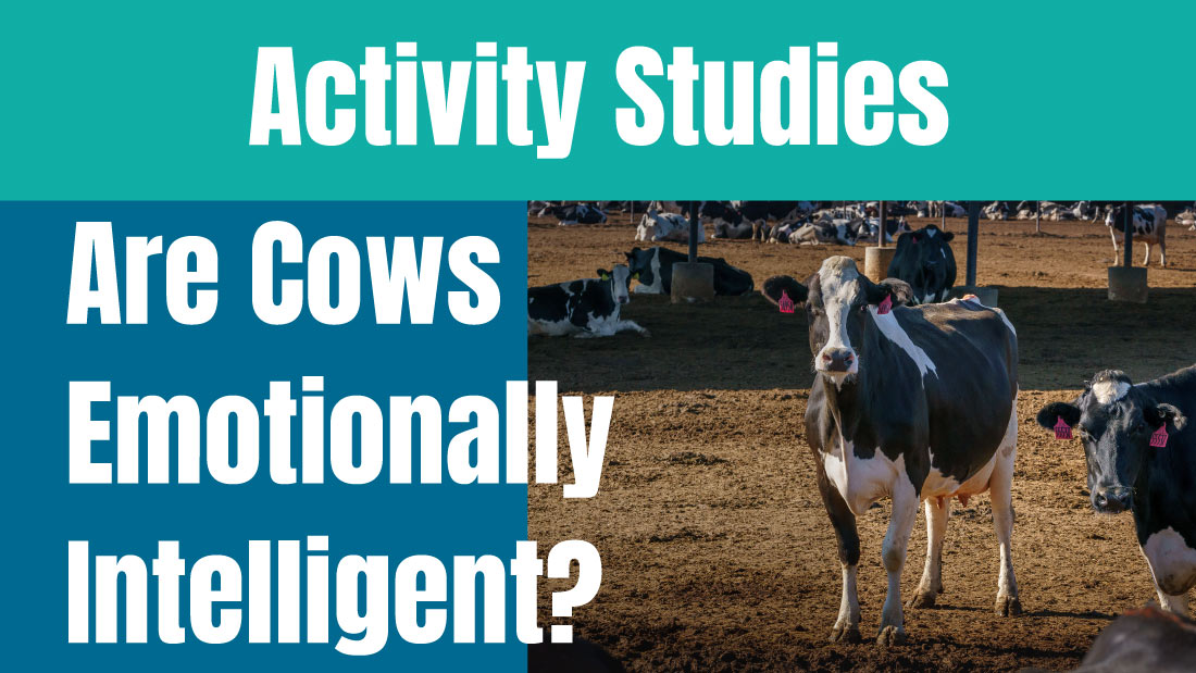 Studies on the Activity of Cows to discover if they are emotionally intelligent.