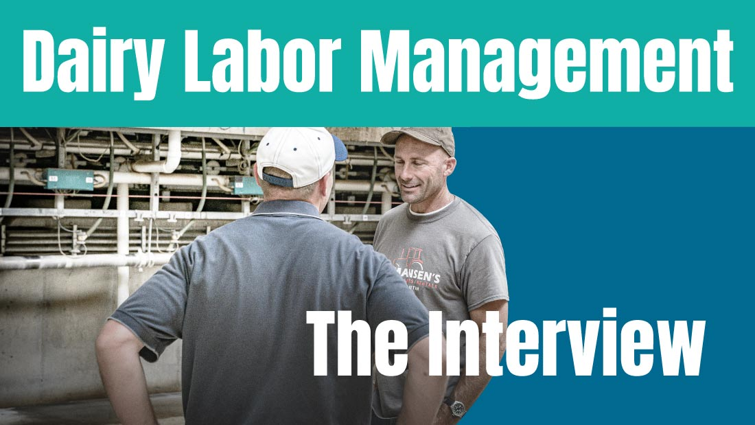 Dairy Labor Management: The Interview
