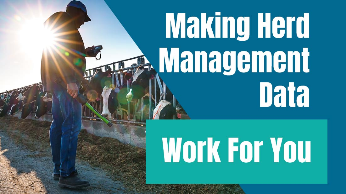 Making Herd Management Data Work For You