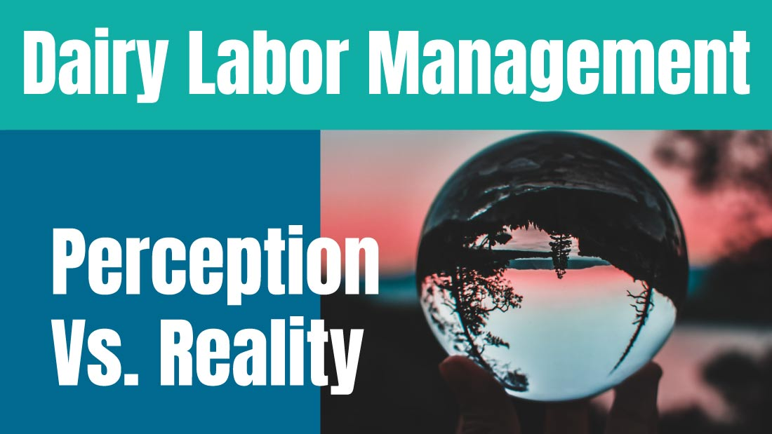Dairy Labor Management: Perception Versus Reality