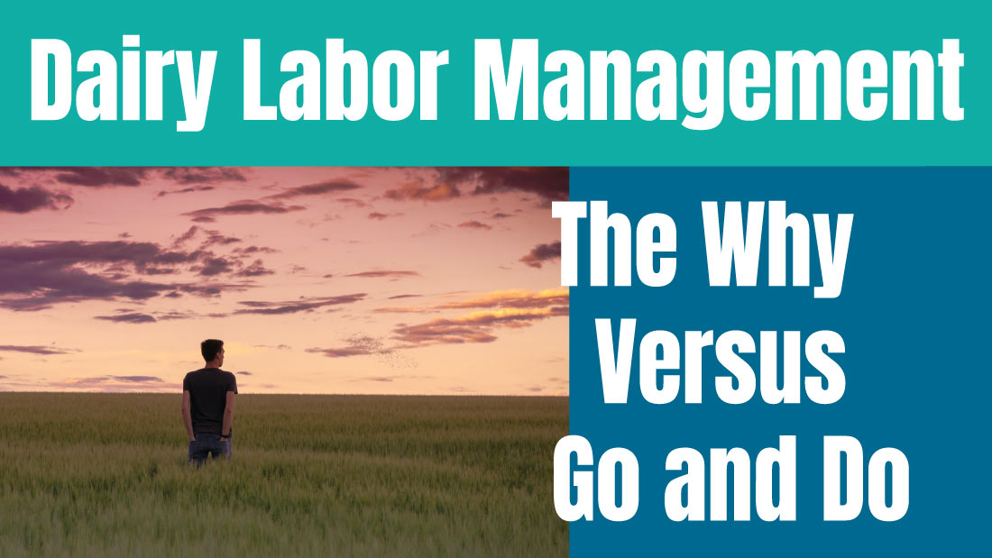 Dairy Labor Management - The Why versus Go and Do
